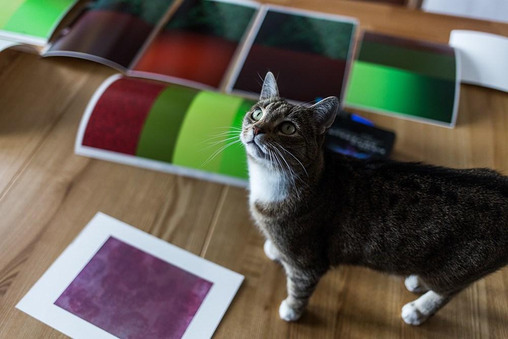 Cat Hitting Printer Video